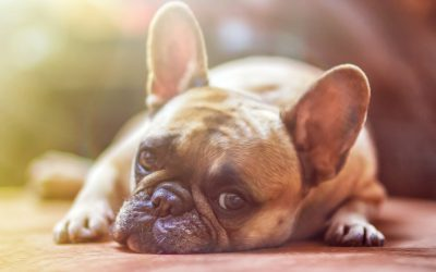 A Guide to Renting with Pets