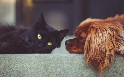 Top Tips for Making Your Move Go Smoothly for Your Pets